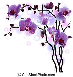 Rama vector de orquídeas violetas