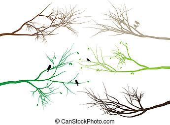 ramas, árbol