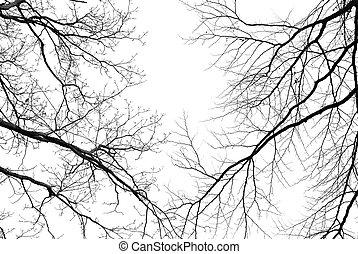 ramas, árbol, descubierto, plano de fondo, blanco, pálido