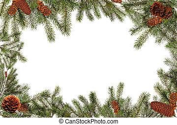 ramas, árbol, fondo verde, blanco, piñas