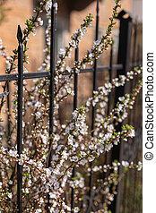 ramas, arbustos, florecer, fondo., jardín
