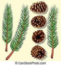 ramas de árbol, conos, pino