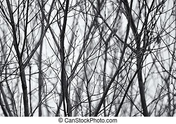 ramas, foto, árboles, descubierto, negro, blanco