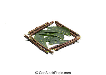 ramitas, plano de fondo, hojas, neem, blanco, aislado, medicinal