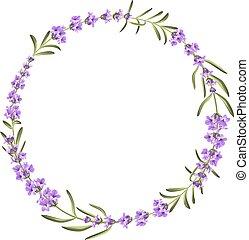 ramo, lavanda, fondo blanco, flores