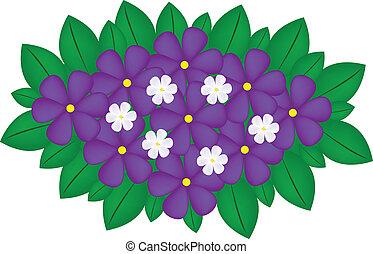 ramo, violeta