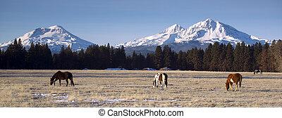Rancho de animales en la base de tres hermanas montañas oregon