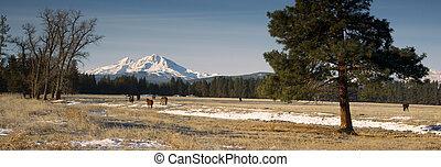 Rancho ganado en la base de tres hermanas montañas oregon