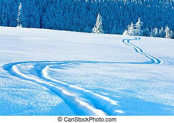 rastro, esquí, behind., abeto, nieve, superficie, bosque