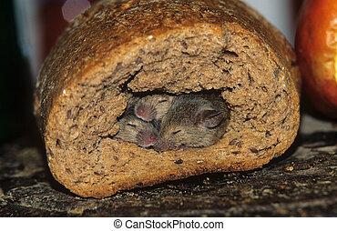 ratones, madriguera, bread