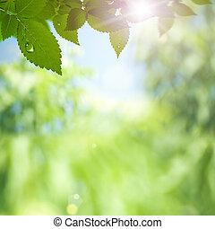 rayos, belleza, sol, resumen, fondos, ambiental, bokeh