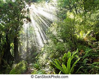 Rayos de rayos de luz solar pisan densa selva tropical