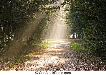 Rayos de sol en el camino
