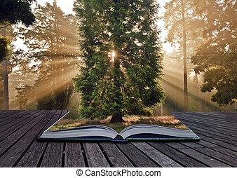 rayos de sol, otoño, o, bosque de otoño, inspirador, venida, paisaje, afuera