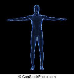 Rayos X cuerpo humano
