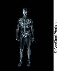 Rayos X, rayos X del cuerpo humano masculino.