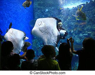 Rays en un acuario gigante con niños mirando