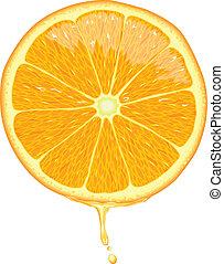 rebanada de naranja, -, vector