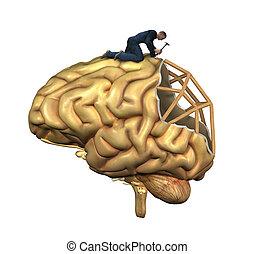 Reconstrucción cerebral