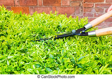 Recortando arbustos con tijeras de jardín