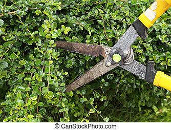 Recortando arbustos con tijeras