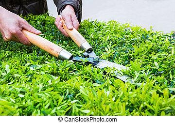 Recortando arbustos en primavera