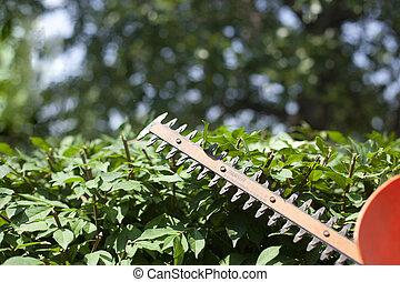 Recortando los arbustos