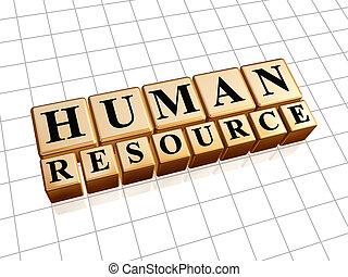 Recursos humanos en cubos de oro