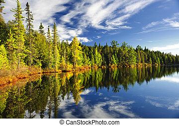 reflejar, bosque lago