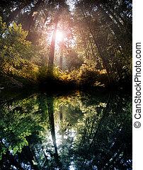 Reflejo forestal