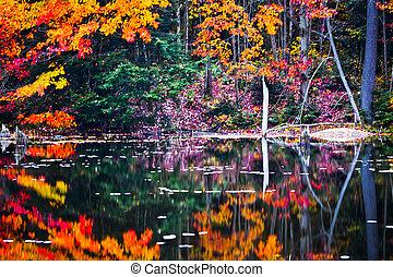 Reflejos en la escena de la ciénaga de otoño