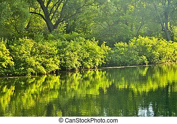 Reflejos verdes en el agua