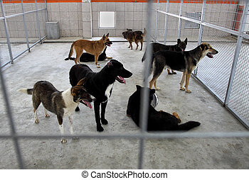 refugio, perros, sin hogar