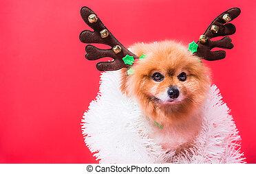 reno, divertido, chihuahua, perro, retrato, disfraz, venado, primer plano, navidad