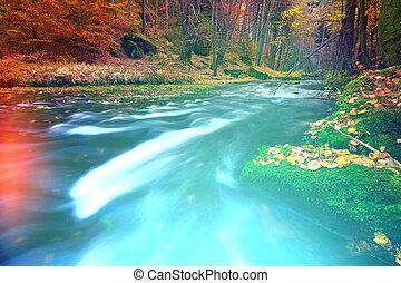 resumen, naturaleza, colorido, soñador, bosque, plano de fondo