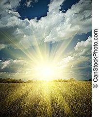 Resumiendo en un campo de trigo