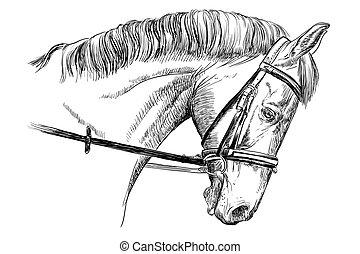 Retrato de caballos con brida