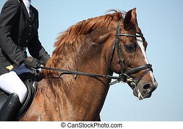 Retrato de caballos durante el espectáculo
