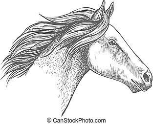 Retrato de dibujo de caballo blanco