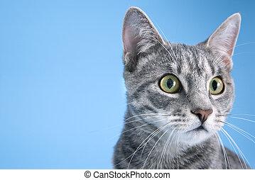 Retrato de gato gris.
