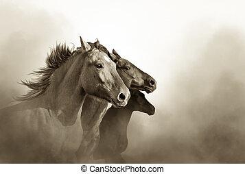 Retrato de tres caballos mustang al atardecer
