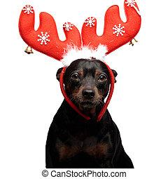 Retrato de un lindo perro moviendo cuernos de reno