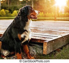 Retrato de un perro amistoso en el jardín