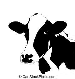 Retrato de vaca negra y blanca