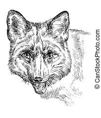 Retrato de vector de zorro