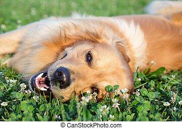 Retrato joven perro de belleza