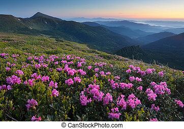 Rhododendron floreciente prado en las montañas