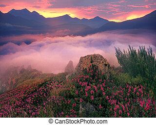 Rhododendrones, hermosas flores alpinas