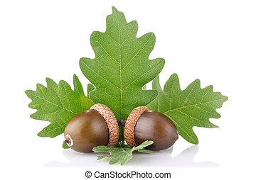 Ripe acorn con hojas verdes