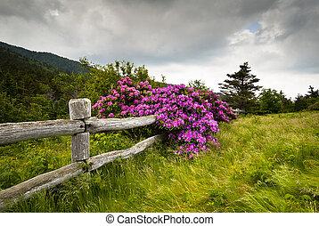 Roan Mountain State Park tallers la flor de rododendron florece naturaleza al aire libre con valla de madera